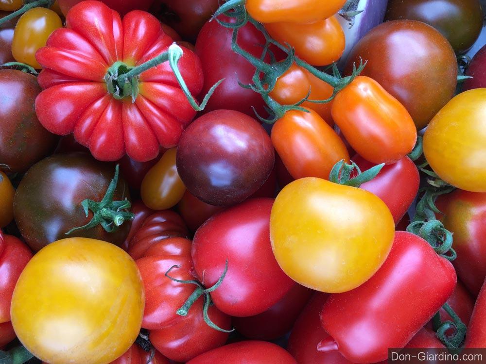 Projekt: Rettung alter Gemüse & Tomatensorten