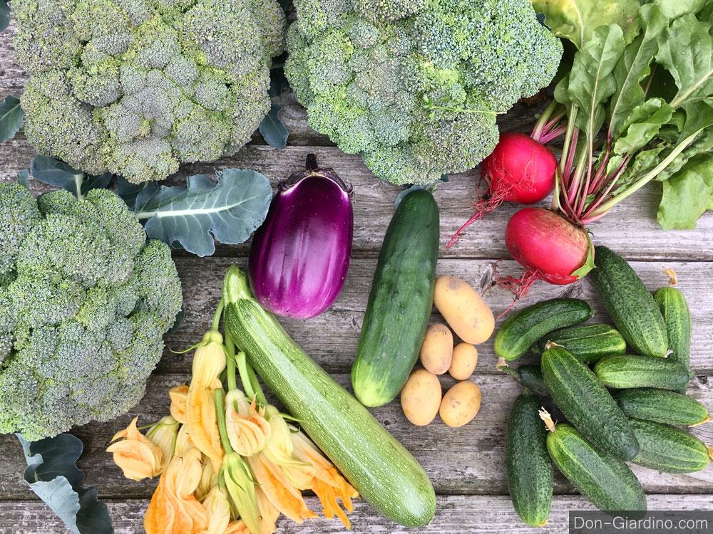 Aktuelle Ernten, richtig frisch und frei von Pestiziden!