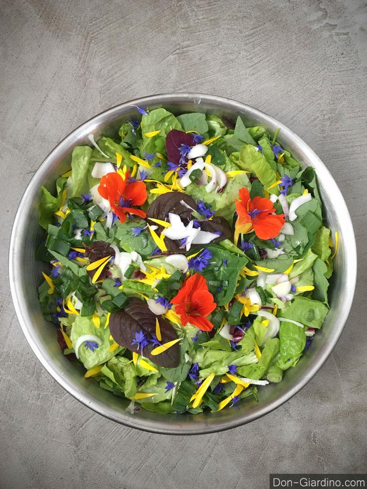 Essbare Blumen, ungespritzt, frisch geerntet nur auf Vorbestellung
