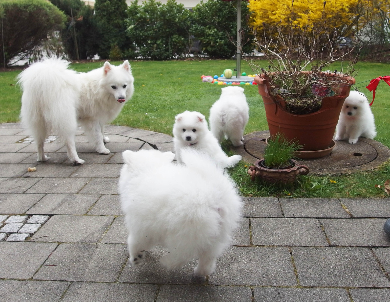 Hurra! Spielen im Garten mit der ganzen Familie!