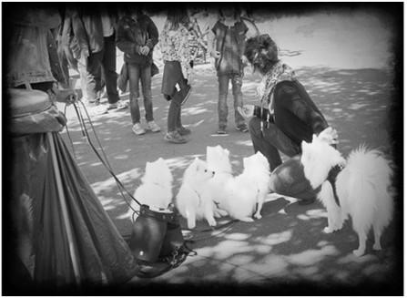 Japanspitze - Laufen an der Leine und Begegnungen in der Stadt  - mit kleinen und großen Menschen, lauten Fahrzeugen, mit anderen Hunden, Vögeln...Katzen