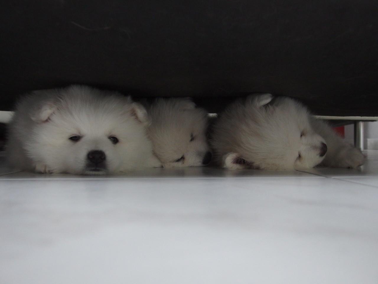 Schläfchen unterm Sofa - da am Liebsten!!