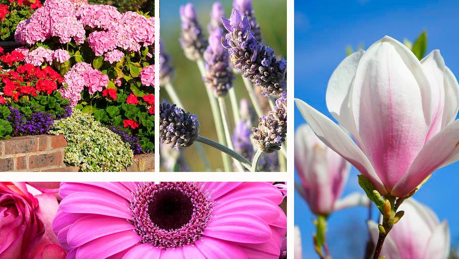 Flores para boda y ramo de novia según época del año
