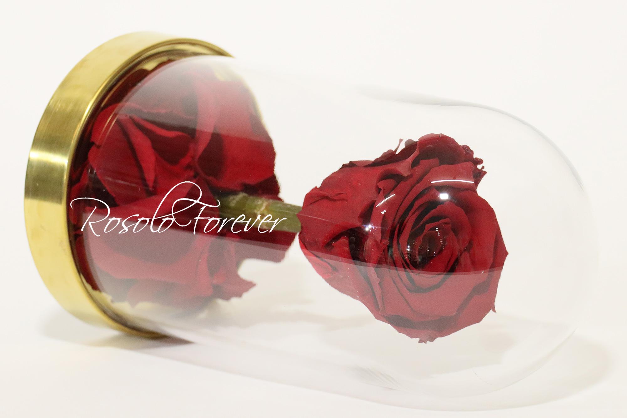 Rose L sous cloche CHF 80.00