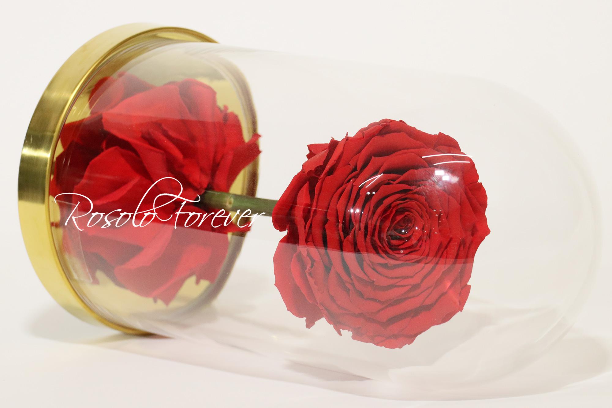 Rose XL sous cloche CHF 120.00