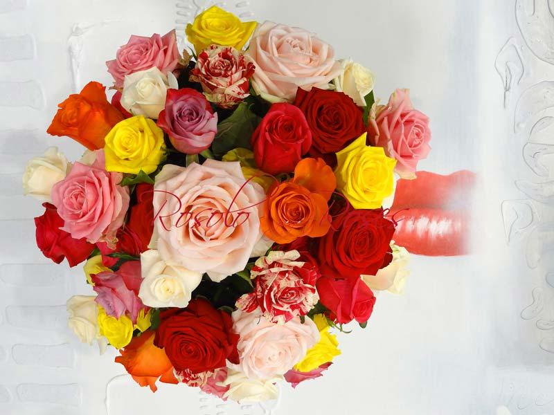 Roses Geneve