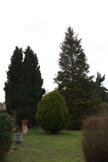 Baumschnitt Burgenland