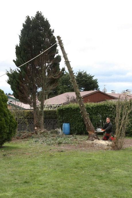 Baumschnitt Neuhauser