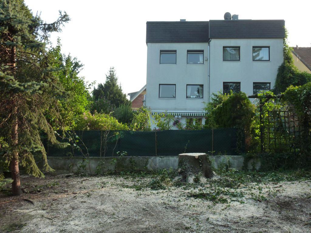 saubere Baumrodung