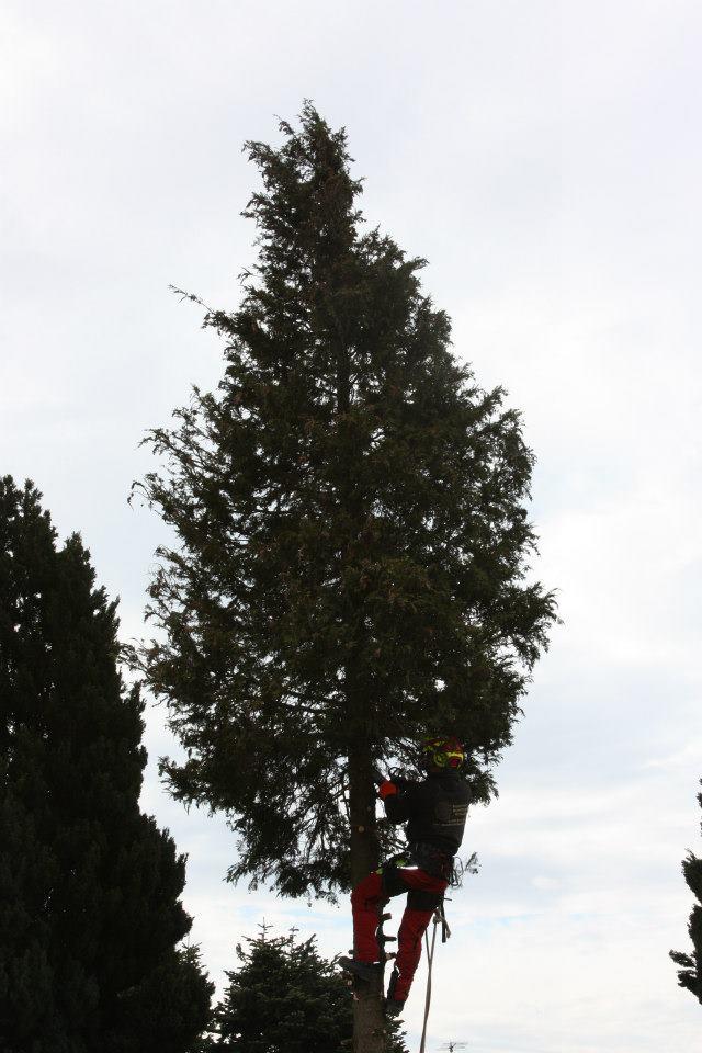 Baumrodung Burgenland