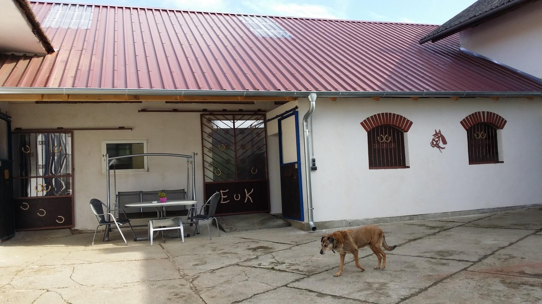 Innenhofboxen- hier relaxed Mensch und Tier
