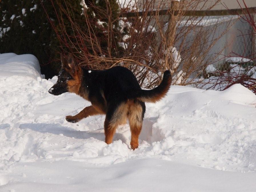Vlek: Wo ist der Schneeball nur hingeflogen