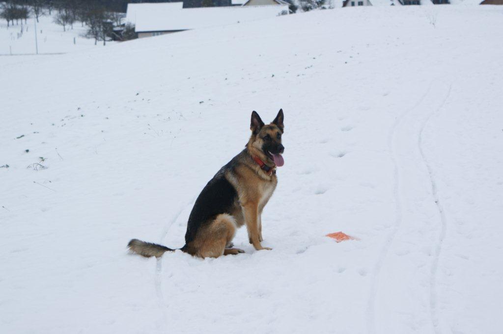 Juhuu endlich Schnee, Therapiehündin Pamina möchte lieber spielen als fotografiert zu werden