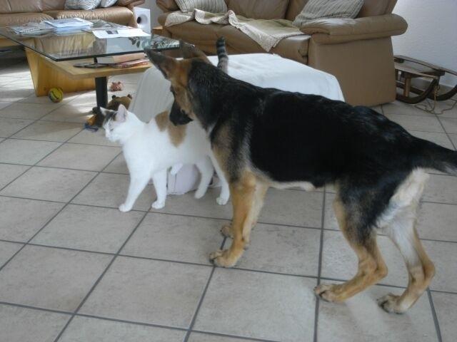 Risha untersucht die Katze etwas genauer, riechen tut sie gar nicht schlecht