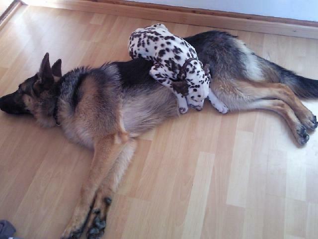 Xito und sein Dalmatiner-Freund Pablo
