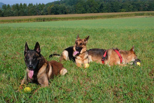 Rana und ihre Hundefreunde