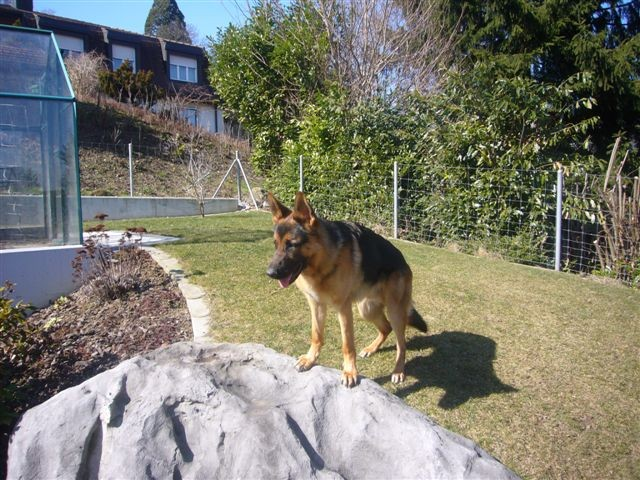Taro schaut von oben herab dem Geschehen zu.