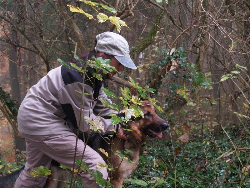 Geza vom Steigbächli bei der Schutzdienstarbeit im Wald