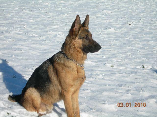 Shura geniesst den Schnee