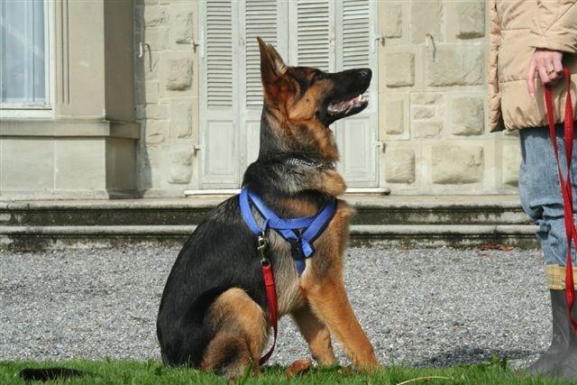 Tasko ist bereit für den Spaziergang