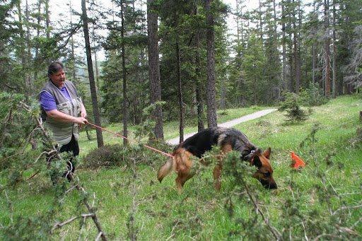 Ursi und Rana auf der konzentrierten Wald-Fährte in der Lenzerheide