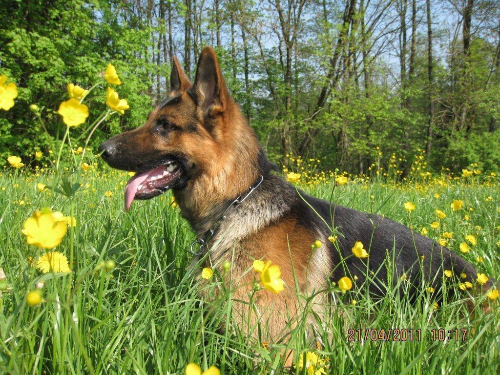 Varos, genannt Diego posiert in der Blumenwiese
