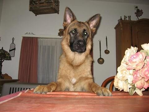 Eloy vom Steigbächli wartet auf die Mahlzeit