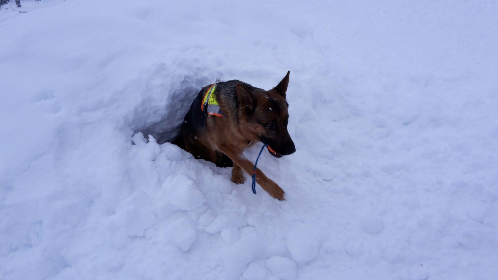 Èron vom Steigbächli, Ausbildung zum Rettungshund