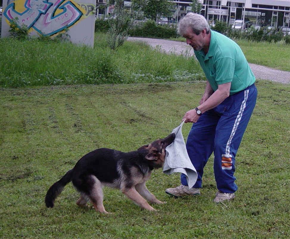 Halwa vom Steigbächli beim Spiel