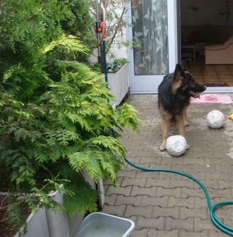 Nanuk sucht einen Fussballgegener