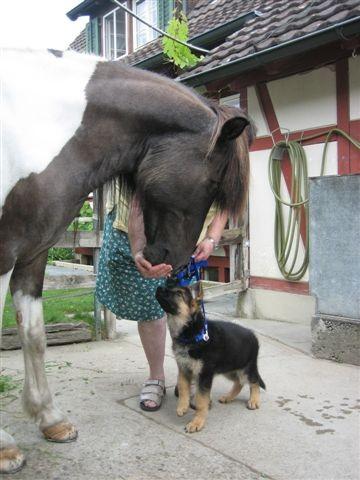 Rana macht die ersten Erfahrungen mit den Pferden