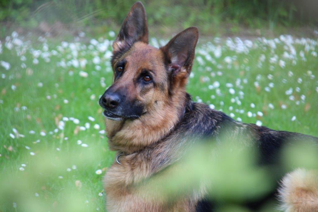 Porträt auf der Frühlingswiese, da macht Rana gerne mit