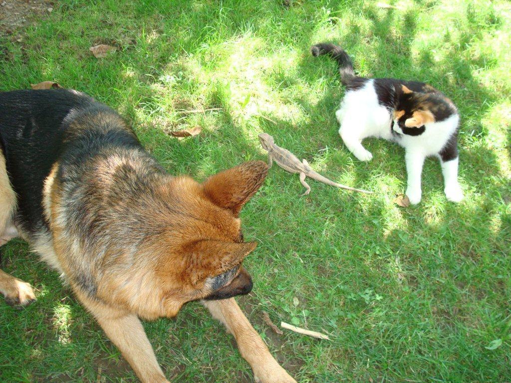 Katze, Bartagame und Thayler geniessen gemeinsam die Sonne