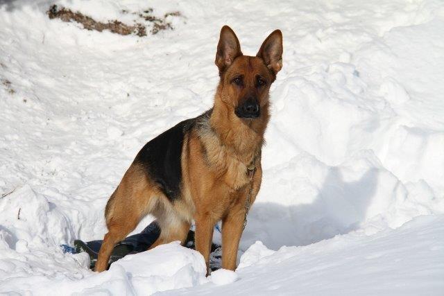 Zamira posiert vor der Arbeit noch kurz im Schnee