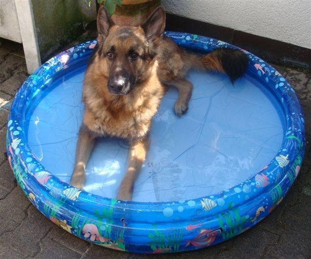 Endlich, der Sommer scheint da zu sein und Jailo geniesst das Wasser