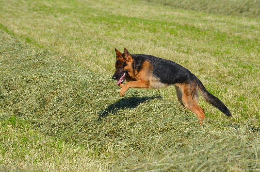 Chaya geniesst es über die Wiesen zu rasen