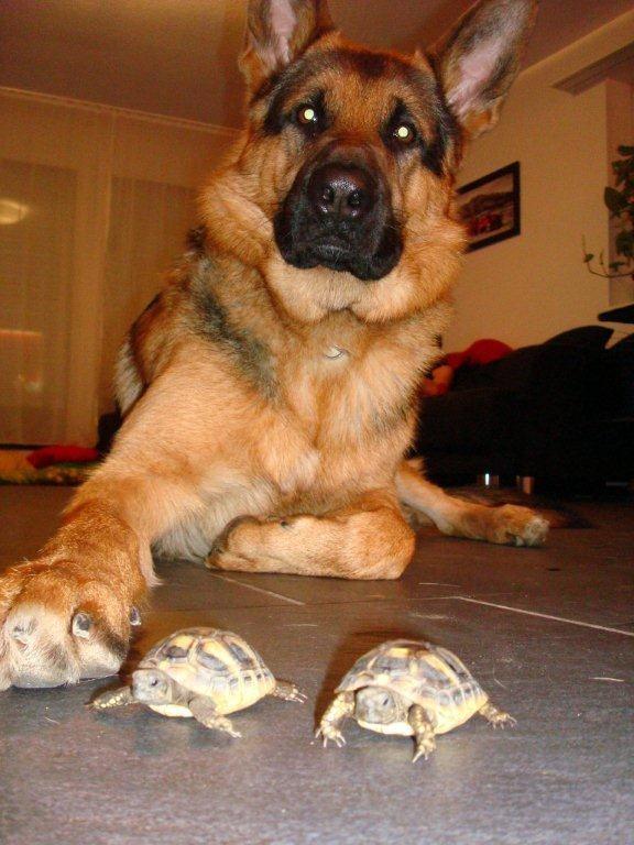 Ob Thayler den Schietsrichter beim Schildkrötenrennen macht