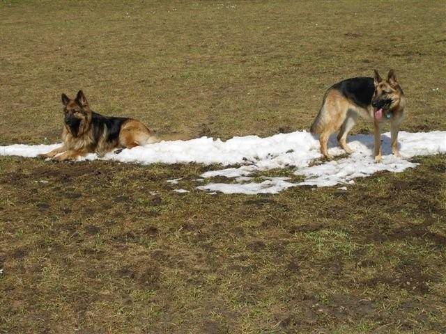Kandy und Paya haben noch etwas Schnee entdeckt