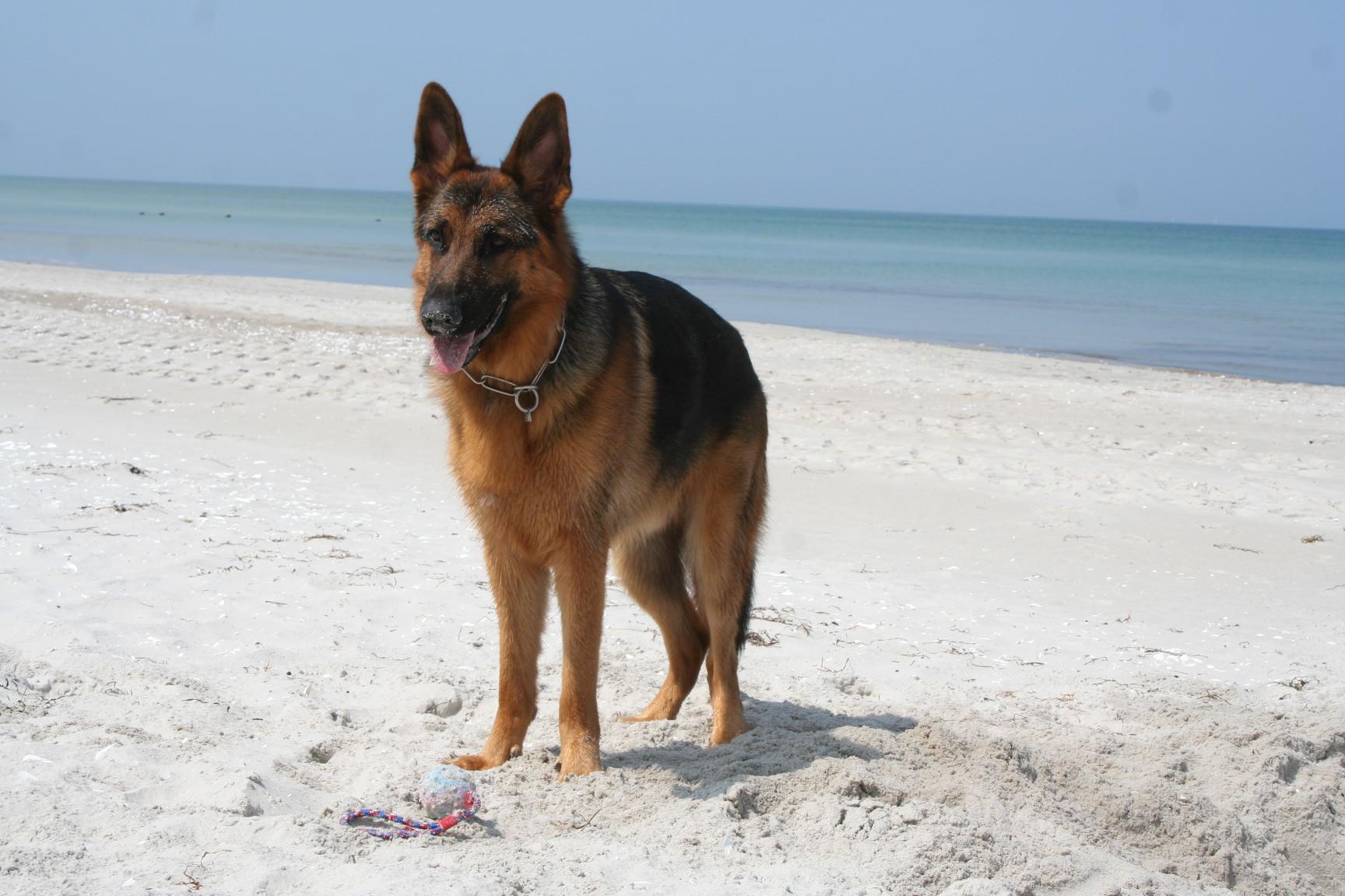 Tasko geniesst den Strand für sich allein