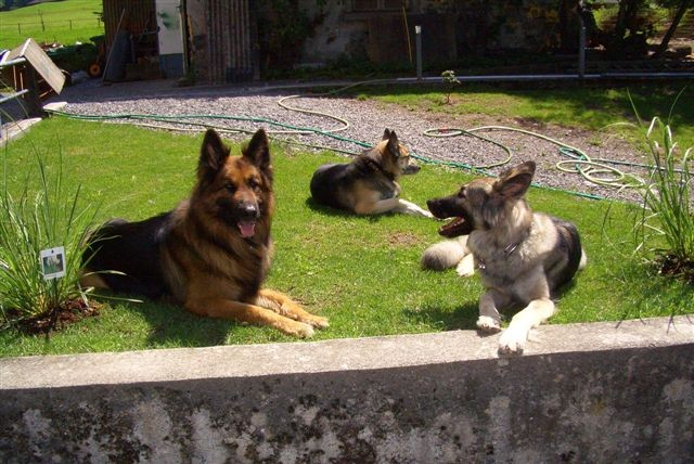 Kawas mit seinen Freunden am sünnälä