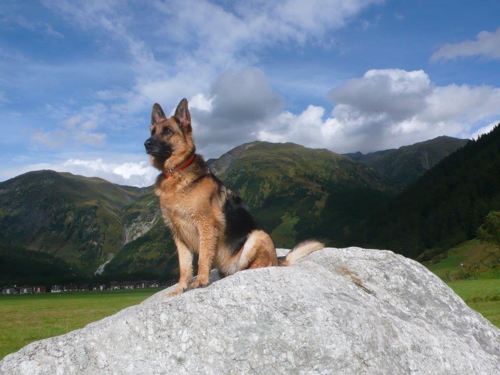 Rana geniesst den Urlaub in Wallis