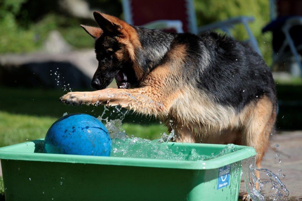 Cresh übt sich im Wasserballspiel