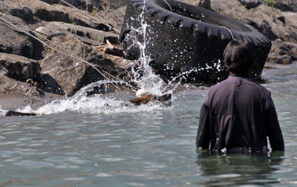 Bailey springt mit Freude ins Wasser