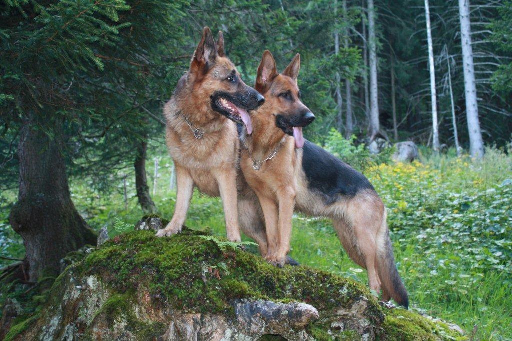 Hera und Zamira posieren bei der Wanderung für ein Foto