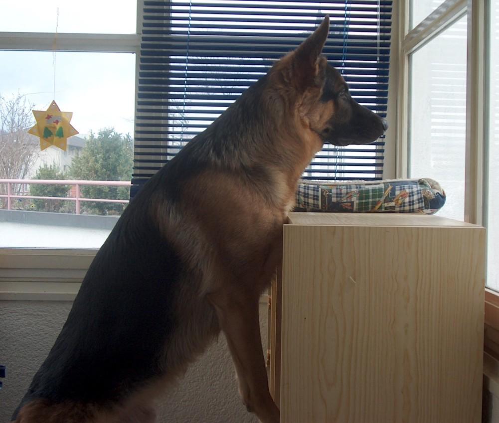 Jailo vom Steigbächli guckt schon mal gerne aus dem Fenster