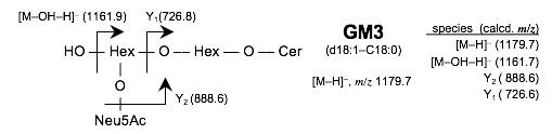 ガングリオシドGM3のMS2解析