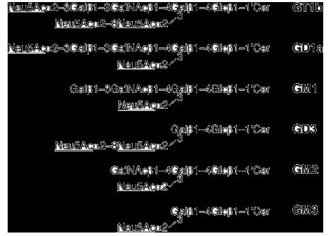 図4 ガングリオシドの略称と構造(シアル酸に下線)(文献6)。