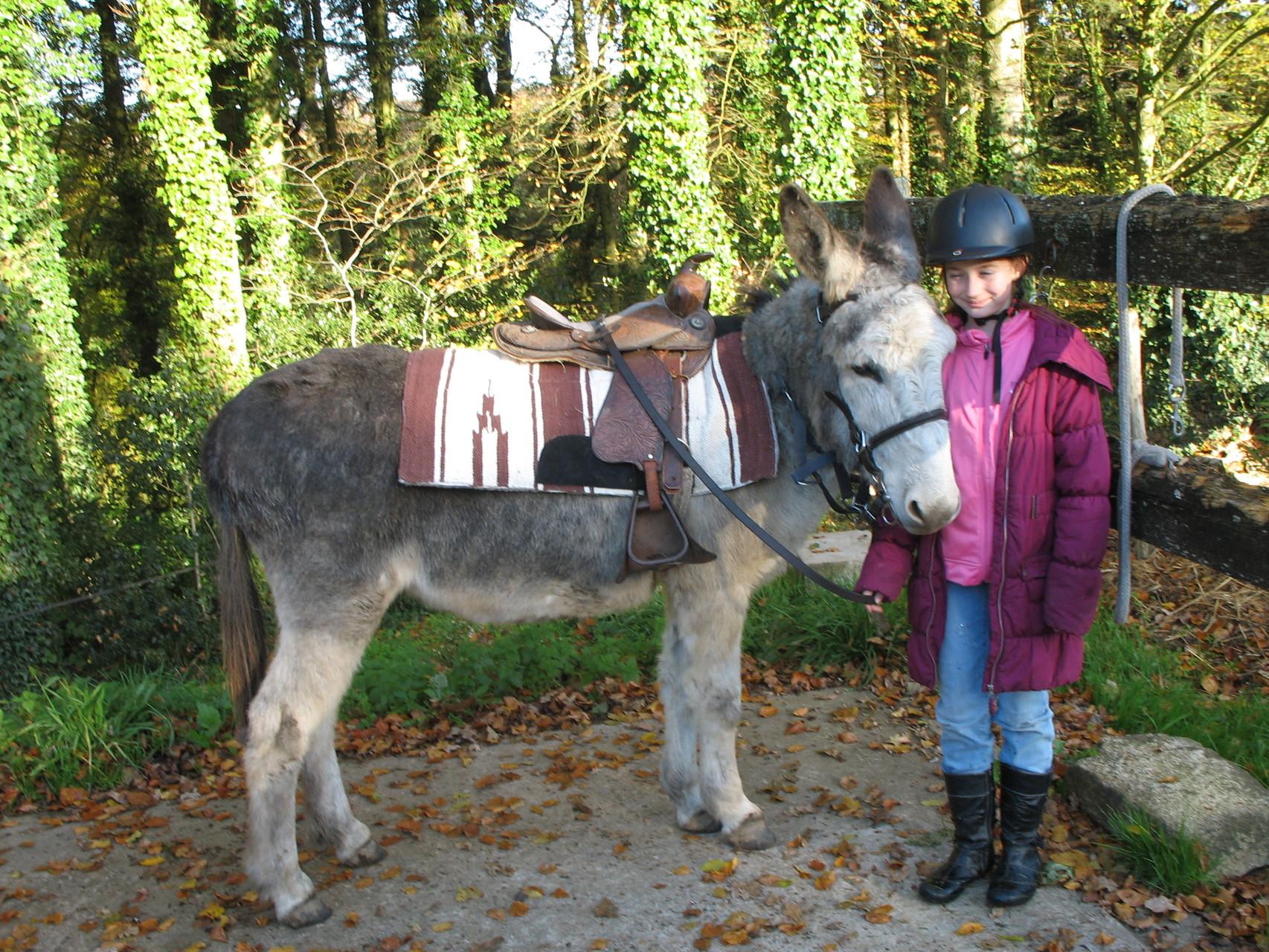 Nestor notre âne gris