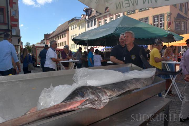 Die 100 Kilo schweren Schwertfische sind auf dem Weinfest eine Neuheit und besondere Delikatesse.