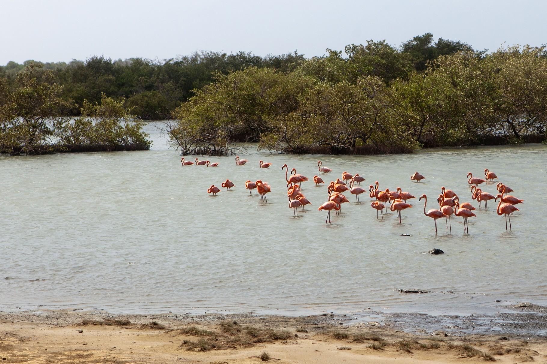 Flamingos auf Bonaire